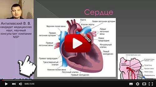 Проблема века: Здоровье сердечно-сосудистой системы!